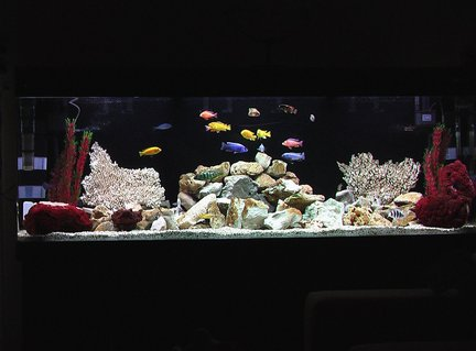 Rated #97: 100 Gallons Freshwater Fish Tank - African Cichlid Tank