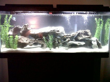 Rated #74: 55 Gallons Freshwater Fish Tank - Cichlid Tank