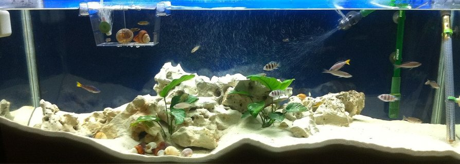 Rated #60: 52 Gallons Freshwater Fish Tank - full tank