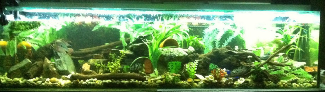 Rated #20: 90 Gallons Freshwater Fish Tank - My 6ft tank