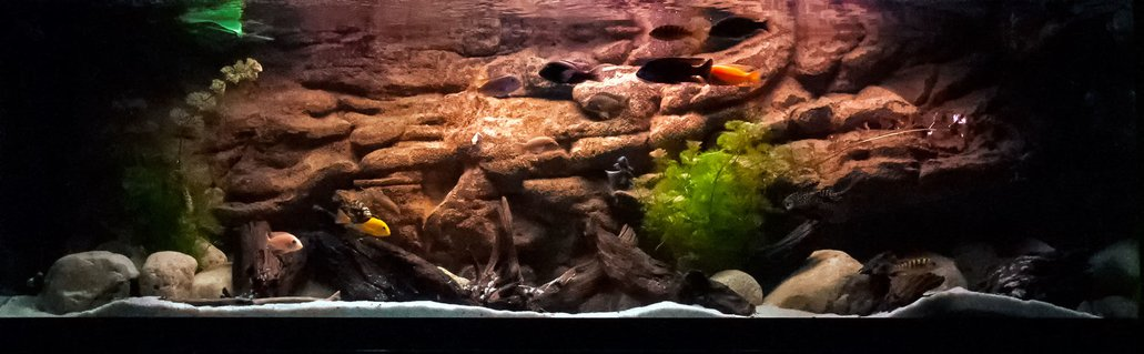 Rated #92: 125 Gallons Freshwater Fish Tank - 125 g african cichlid.