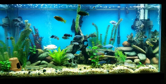 Rated #32: 90 Gallons Freshwater Fish Tank