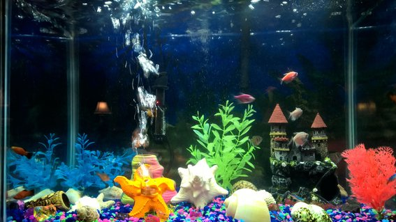 Rated #78: 20 Gallons Freshwater Fish Tank - Moment in time