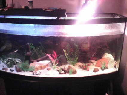 Rated #72: 70 Gallons Freshwater Fish Tank - Sorry for the quality