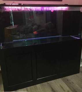 Rated #92: 280 Gallons Freshwater Fish Tank - 121