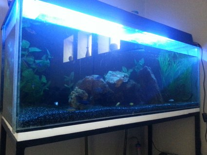 Rated #79: Freshwater Fish Tank - A