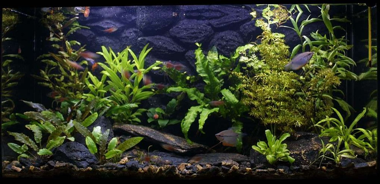 Rated #63: 25 Gallons Freshwater Fish Tank - 29.6.2007