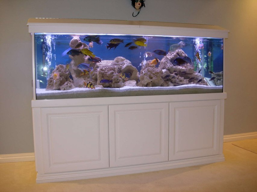 Rated #2: 172 Gallons Freshwater Fish Tank - Cichlids Cove