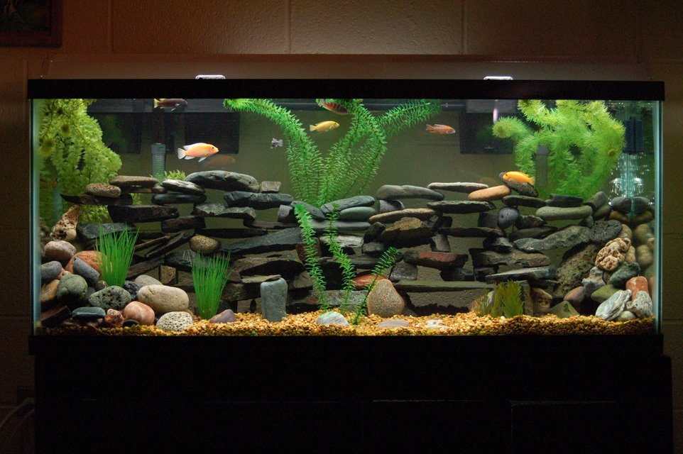 Rated #11: 55 Gallons Freshwater Fish Tank - Current View of my tank