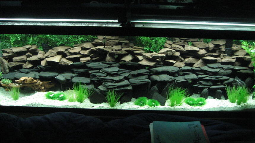 Rated #84: 125 Gallons Freshwater Fish Tank - Work in progress