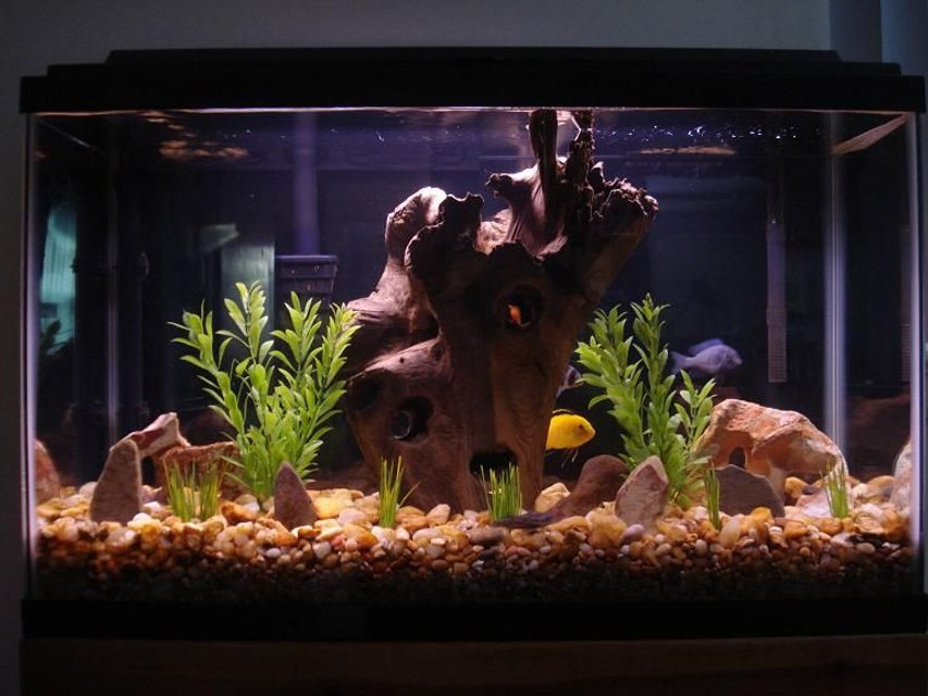 Rated #82: 29 Gallons Freshwater Fish Tank - Cichlid Tank