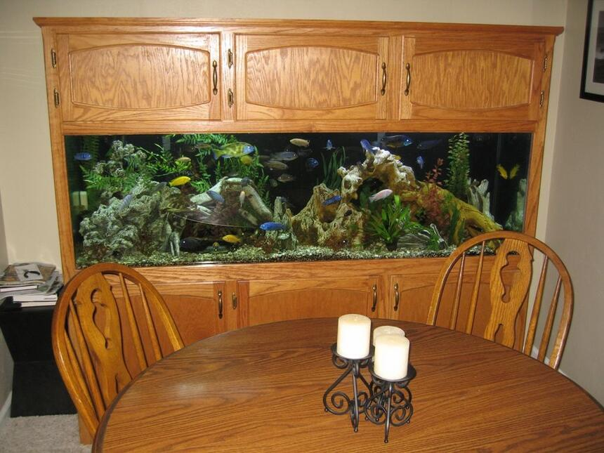 Rated #39: 125 Gallons Freshwater Fish Tank - Full Tank Shot