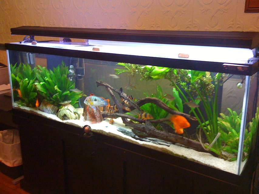 Rated #53: 125 Gallons Freshwater Fish Tank