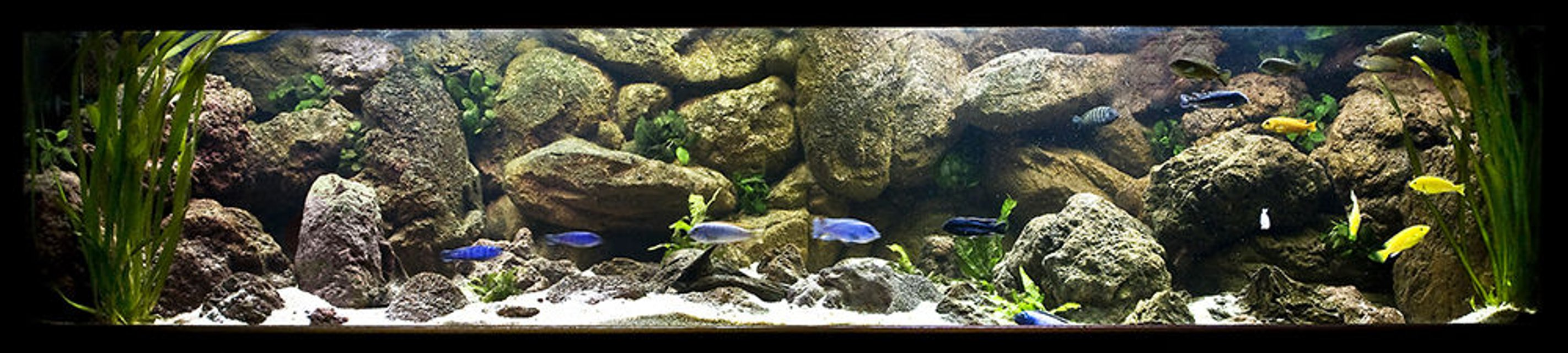 Rated #2: 160 Gallons Freshwater Fish Tank - My Mbuna tank