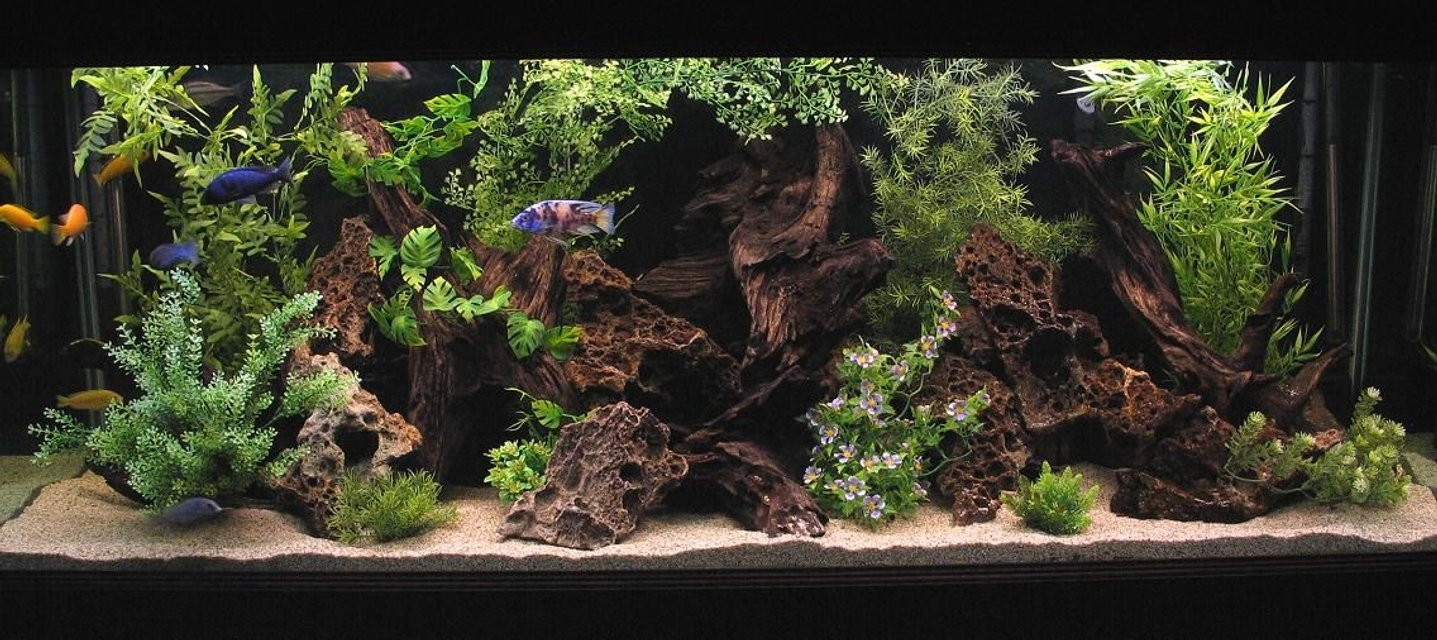 Rated #3: 180 Gallons Freshwater Fish Tank - 180 Gallon Show Tank.
