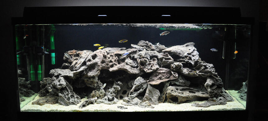 Rated #59: 120 Gallons Freshwater Fish Tank - My 120 gallon Mixed African Tank...
