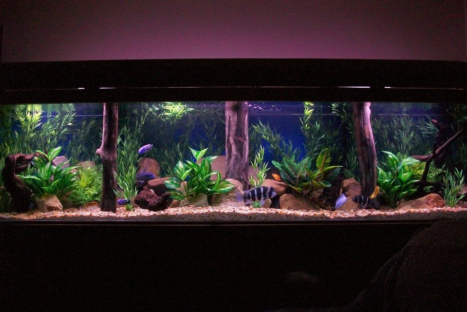 Rated #5: 350 Gallons Freshwater Fish Tank - 350 gal