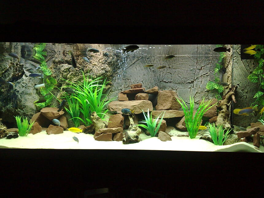 Rated #86: 105 Gallons Freshwater Fish Tank - 400ltr Malawi Tank.