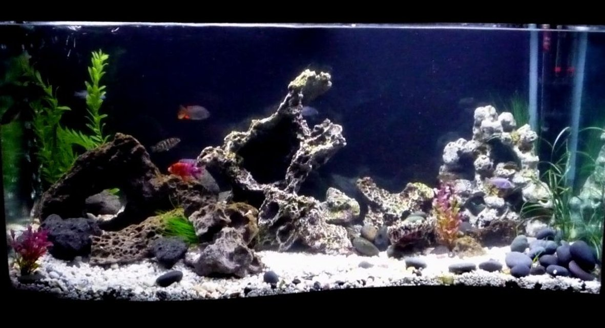 Rated #53: 110 Gallons Freshwater Fish Tank - Clearer Pictures