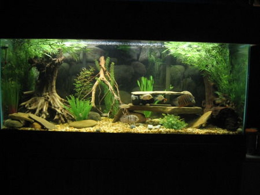 Rated #9: 75 Gallons Freshwater Fish Tank - 75 Gallon American Cichlid Tank