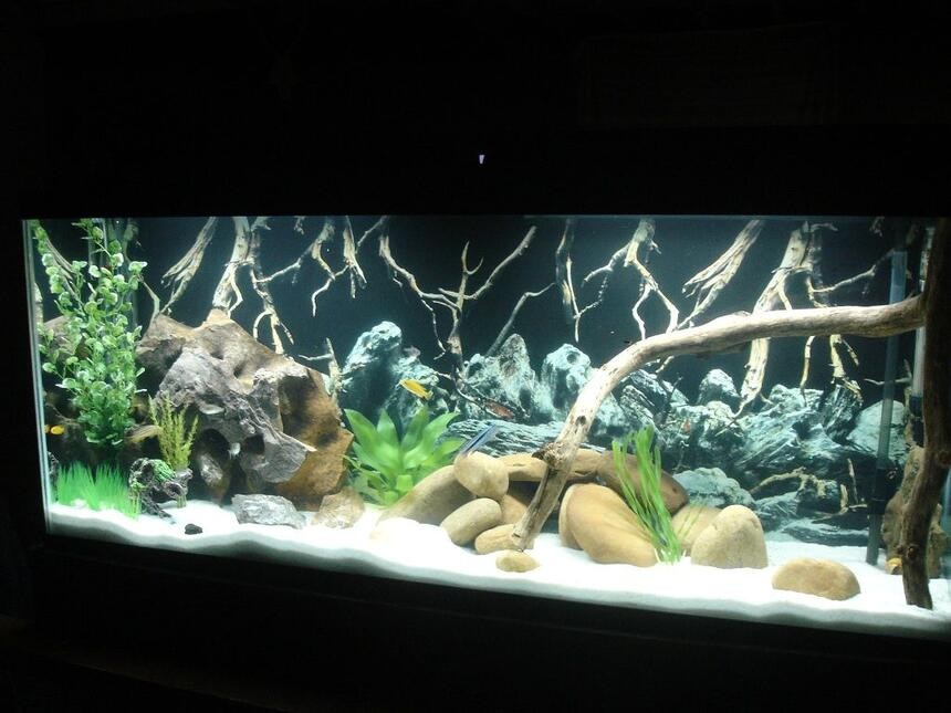 Rated #40: 55 Gallons Freshwater Fish Tank - Marineland 55g Cichlid Tank