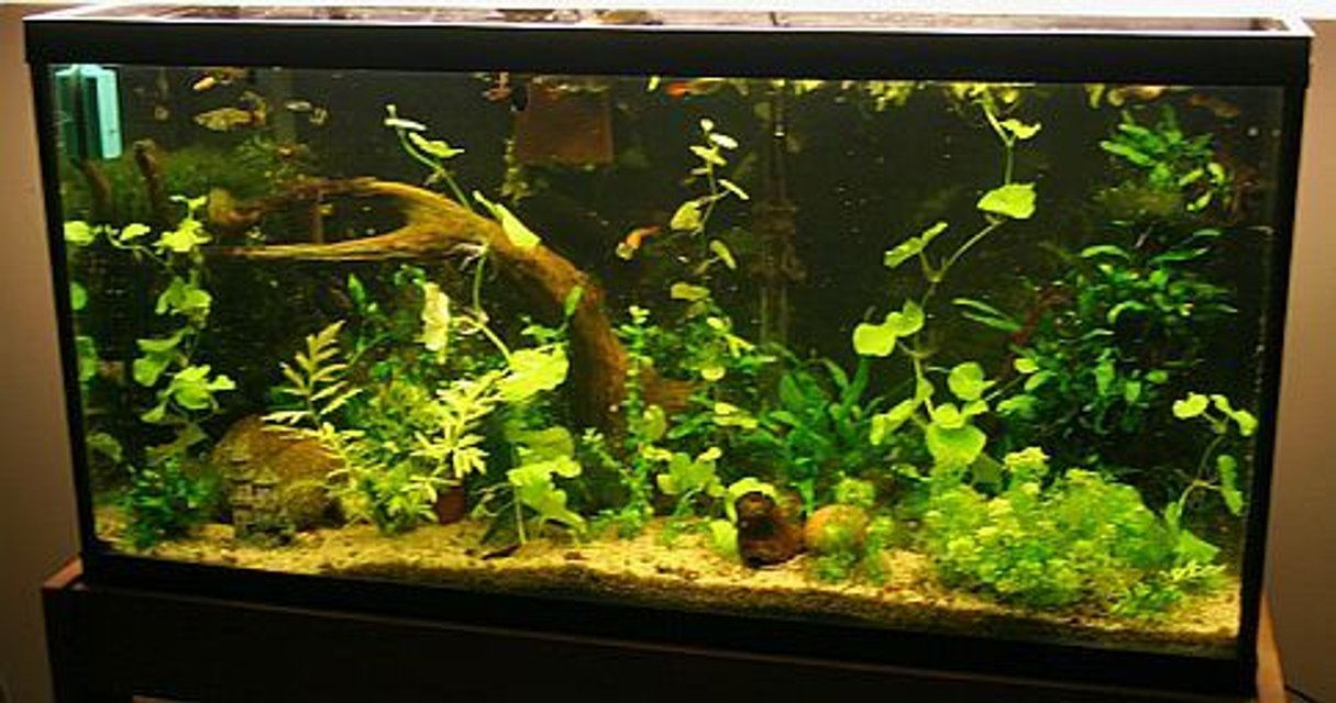 Rated #73: Freshwater Fish Tank - 33g guppies and cherry shrimp