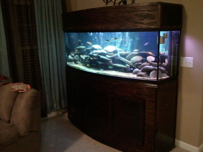 Rated #29: 155 Gallons Freshwater Fish Tank - 155gal Bow Front-Custom built stand and canopy