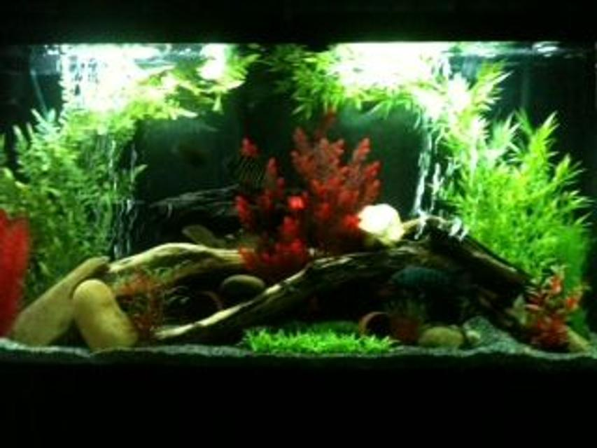 Rated #27: 65 Gallons Freshwater Fish Tank - Amazon Biotope