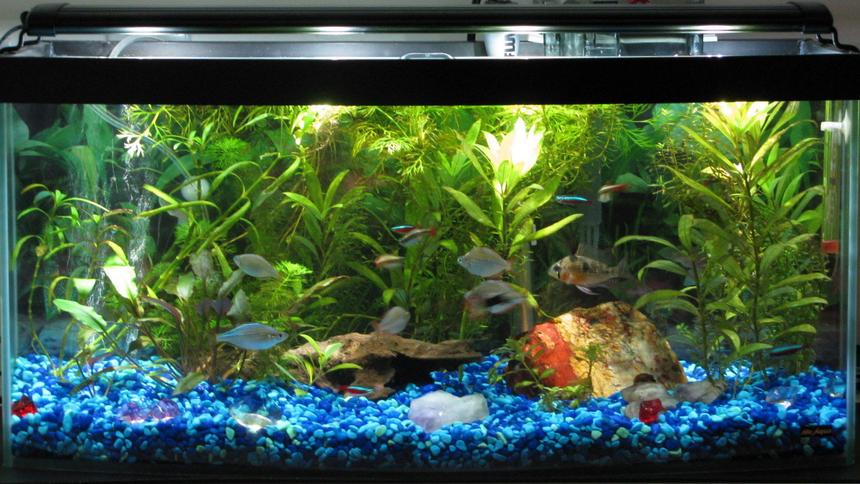 Rated #61: 13 Gallons Freshwater Fish Tank - 13 gallon bowfront