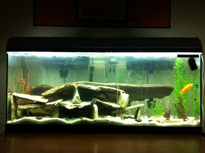 Rated #62: 55 Gallons Freshwater Fish Tank - new setup for my 55 gallon. lots of river rock with a large piece of driftwood in the background for decor.