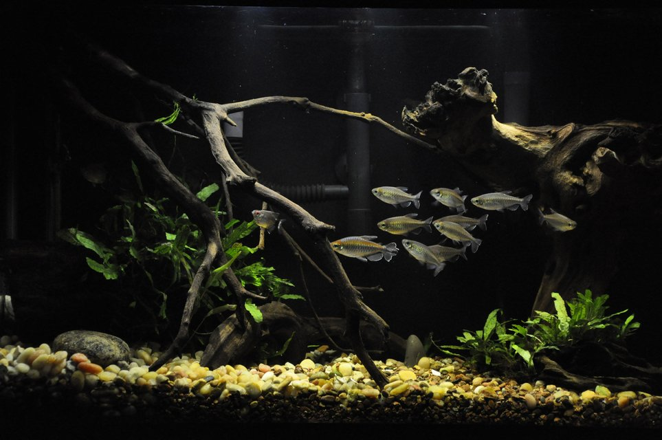 Rated #2: 29 Gallons Freshwater Fish Tank - 29gal, I like it, but can't wait to go bigger!