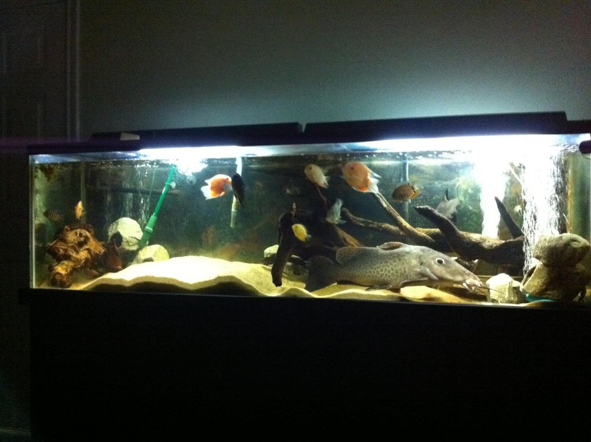 Rated #41: 125 Gallons Freshwater Fish Tank - My 125gallon