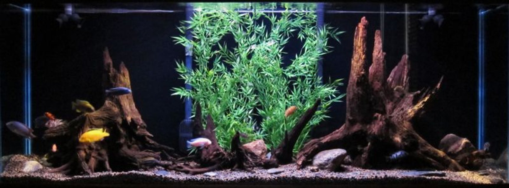 Rated #42: 150 Gallons Freshwater Fish Tank - 150g african cichlid tank