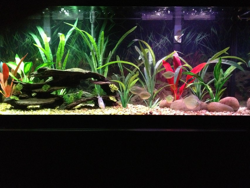 Rated #83: 55 Gallons Freshwater Fish Tank - 55 gallon Freshwater