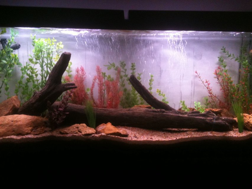 Rated #82: 55 Gallons Freshwater Fish Tank - All artificial plant tank,with real driftwood, and sandstone. Almost done cycling and will be stocking soon.