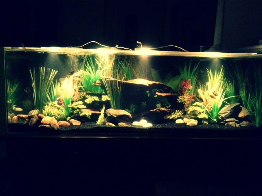 Rated #11: 40 Gallons Freshwater Fish Tank - River Paradise