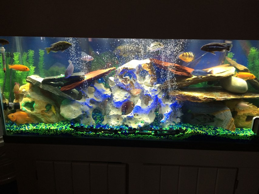 Rated #73: 55 Gallons Freshwater Fish Tank - Love all the colors