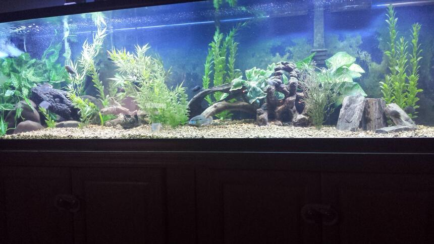 Rated #54: 75 Gallons Freshwater Fish Tank - 125 gallon south american