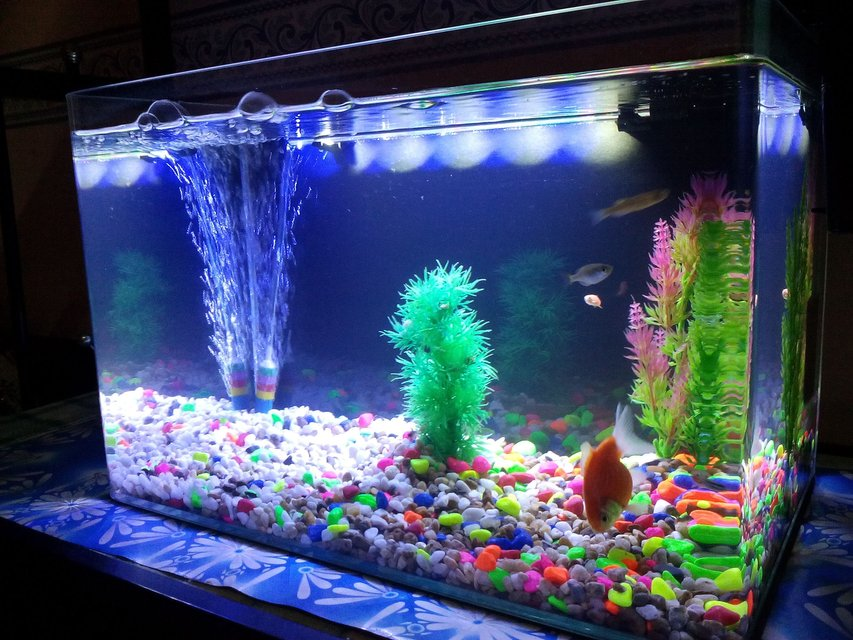 Rated #81: 6 Gallons Freshwater Fish Tank - 2 weeks with this new tank