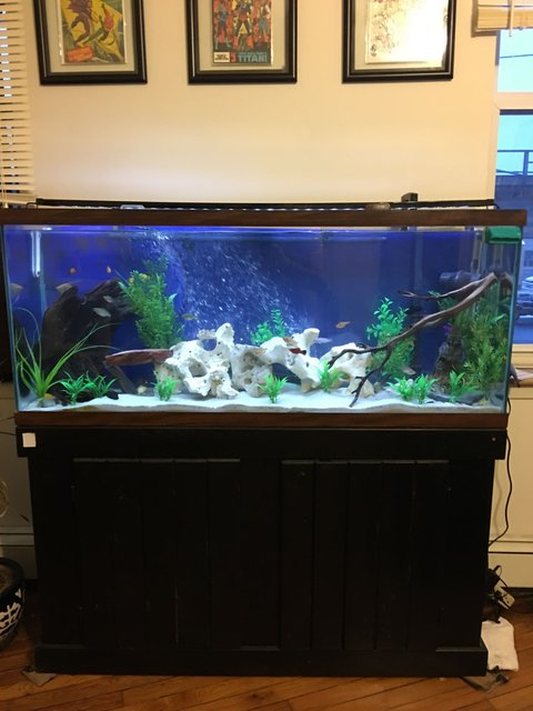 Rated #43: 55 Gallons Freshwater Fish Tank - Work in progress cichlid tank