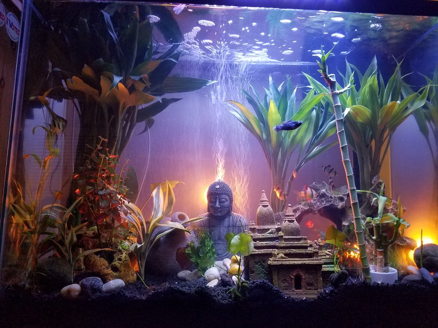 Rated #23: 37 Gallons Freshwater Fish Tank - First week, waiting on a additional 225 led 14 watt marine lamp