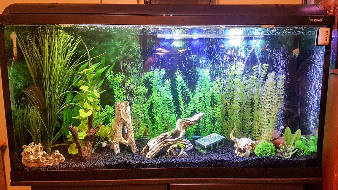 Rated #31: 75 Gallons Freshwater Fish Tank - My 75 gallon freshwater community tank