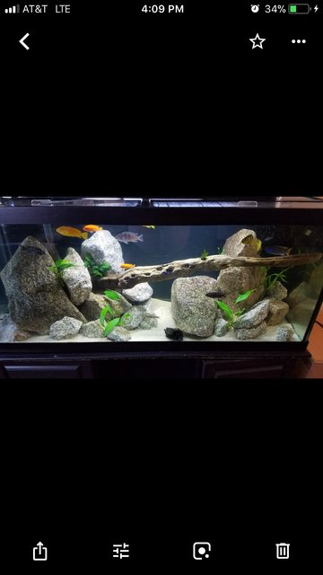 Rated #103: 75 Gallons Freshwater Fish Tank - 75 Gallon cichlid tank
