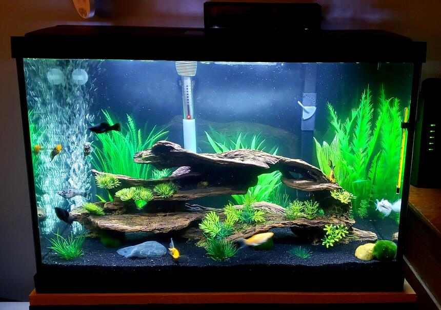 Rated #13: 20 Gallons Freshwater Fish Tank - Mollie 20g tank