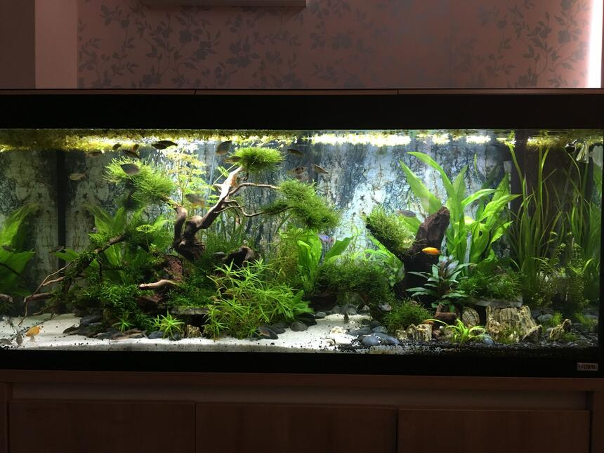 Rated #15: 63 Gallons Freshwater Fish Tank - The Realm