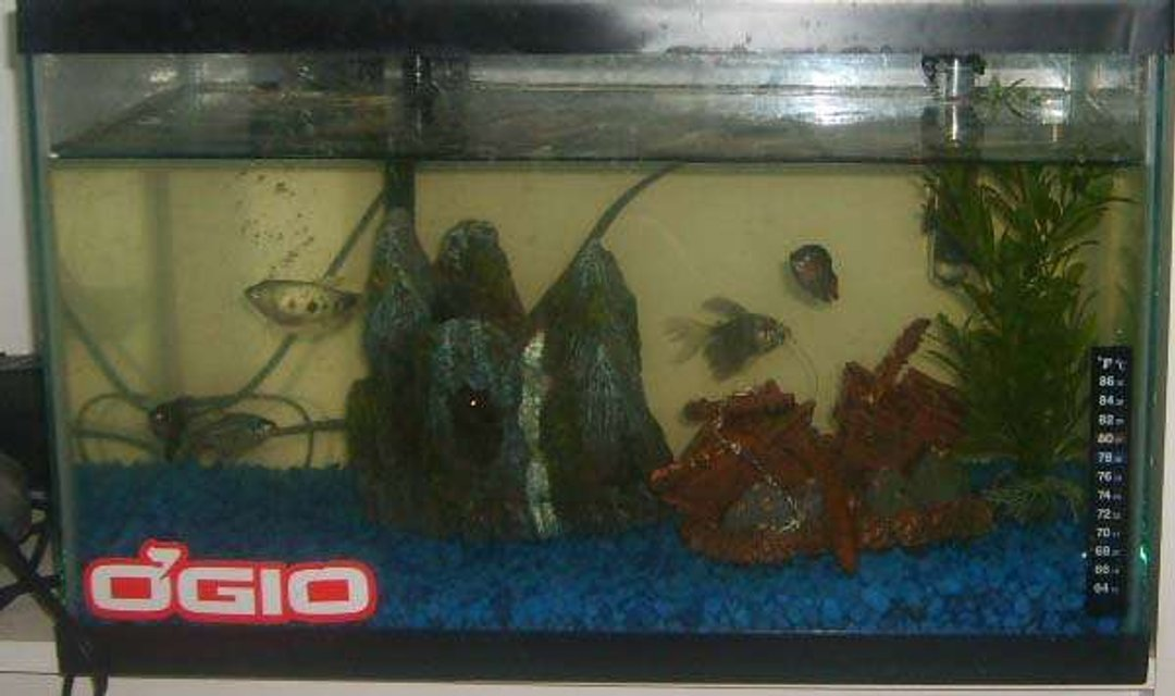 Rated #4241: 10 Gallons Freshwater Fish Tank - my first tank 10g  semi agr fish