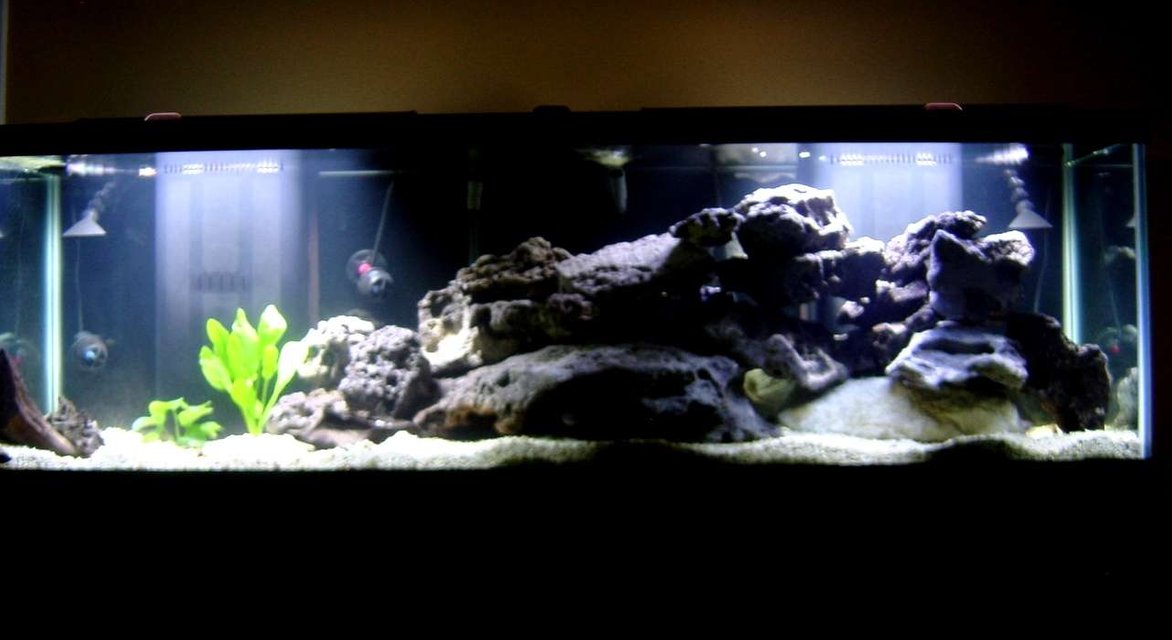 Rated #61: 125 Gallons Freshwater Fish Tank - My 125 gallon cichlid tank.  It contains 2 ruby red peacocks, red top zebra, 2 johannis, crenicichla proteus, and a pleco.  The tank is still under construction, so more fish will be coming and going.