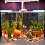 freshwater fish tank (mostly fish and non-living decorations) - betta 'tanks' - 1 gal each