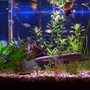 freshwater fish tank (mostly fish and non-living decorations) - 29 Gal freshwater