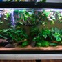 55 gallons freshwater fish tank (mostly fish and non-living decorations)